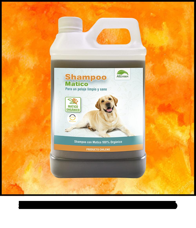 shampoo litro